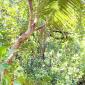 Bluesky wires in the trees in Alega