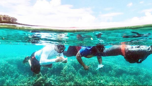 Marine Science students underwater examining reef