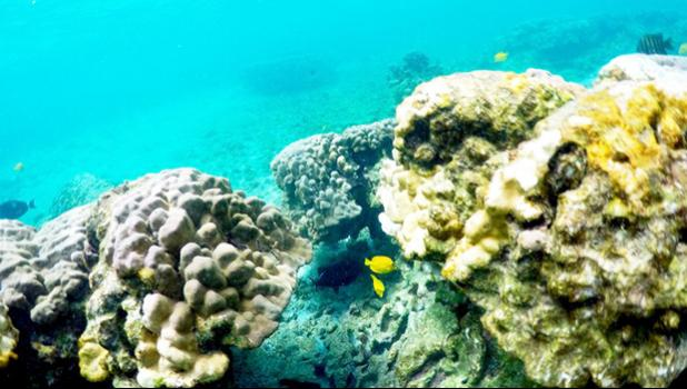 This Sept. 12, 2019 photo shows bleaching coral in Kahala'u Bay in Kailua-Kona, Hawaii