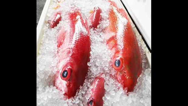 bottomfish on ice