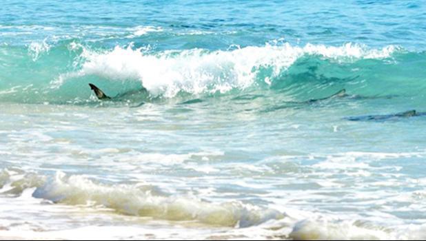 shark seen through the surf