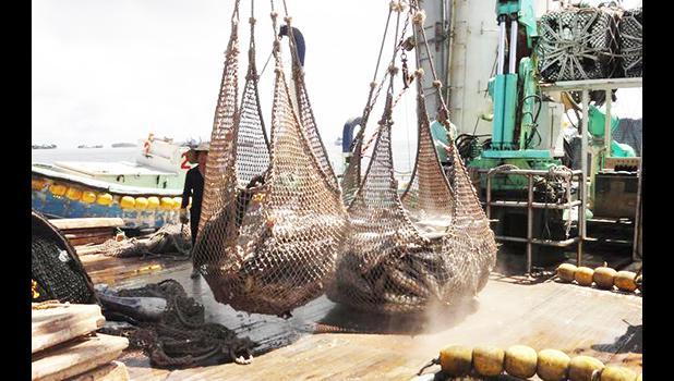 Tuna in a net on deck of purse seiner