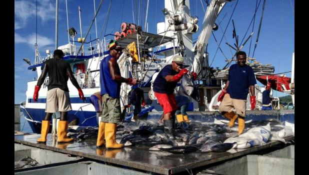 Unloading yellowfin from a longliner  in Tonga