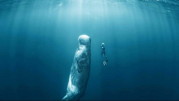 Whale swimming toward the surface with a diver beside