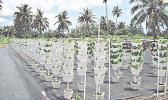 This 2012 photo shows hydroponic vertical stack drip method at Avegalio Farm Pavaiai [photo: USDA]