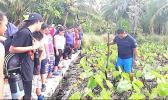 Taro plantation on Aunuu.
