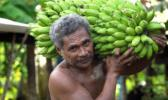 Man carrying a stalk of bananas