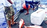 Two men looking at bottom fish on board a boat